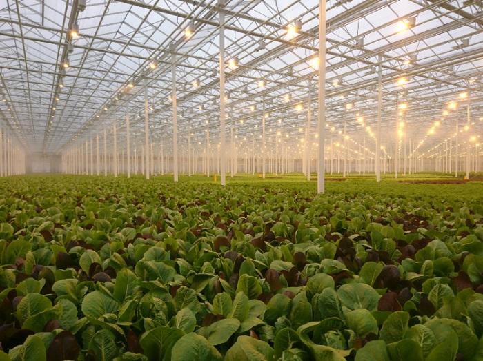 스마트팜 농장